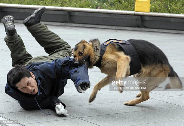A police dog bites the arm of a 'suspect' during an antiterrorism practice at the Tokyo shopping and business mall of Roppongi Hills on June 4 2008...