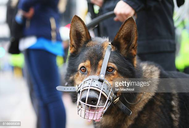A police dog patrols outside the ground prior to the Barclays Premier League match between Newcastle United and Sunderland at St James' Park on March...