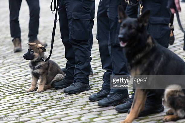 Police dog small and grown up handlers line up with at Roskilde Cathedral where the murdered Danish police officer Jesper Jul receives a state...