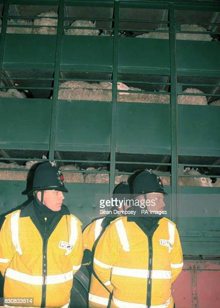 Police guarding a lorry exporting sheep abroad during a demonstration against live animal exports in Brightlingsea Sussex 25/2/02 The majority of...