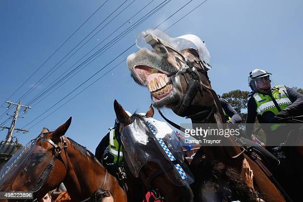 Police horse keep protester from clashing during a Reclaim Australia rally held in Melton on November 22 2015 in Melbourne Australia Protestors...