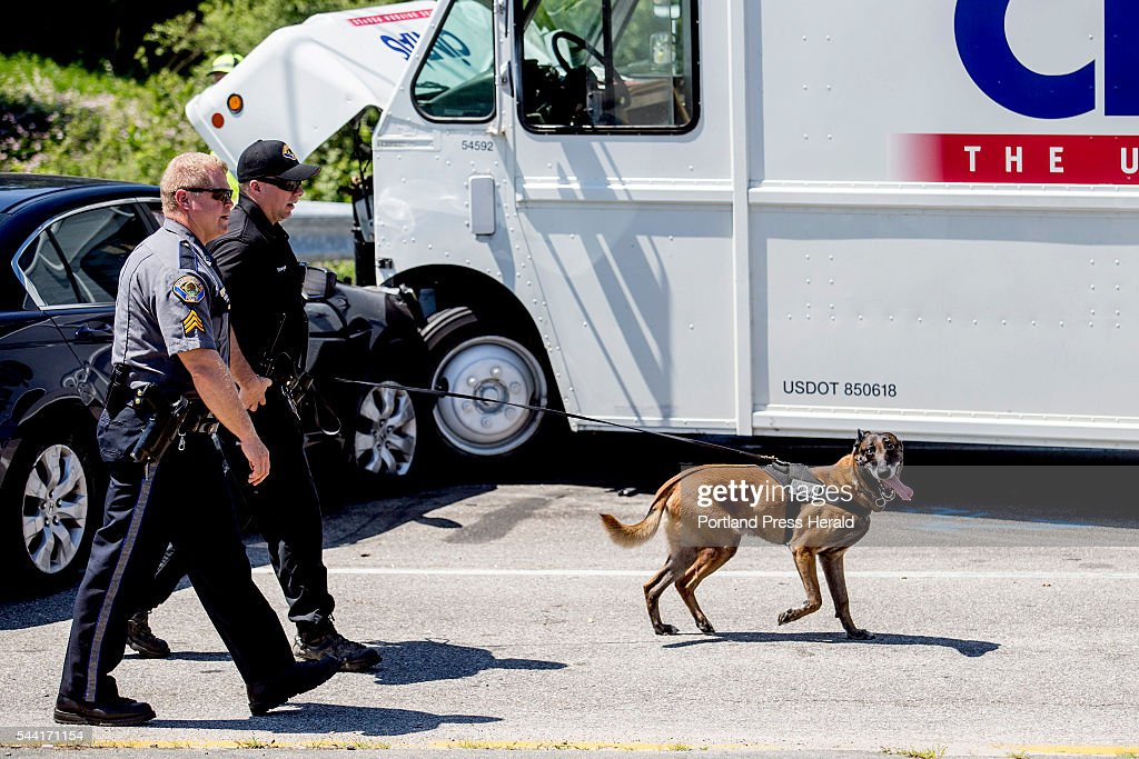 Police in Scarborough use a K-9 unit to search for a man after he fled the scene of a crash on Cummings Road in Scarborough Friday morning, July 1, 2016.