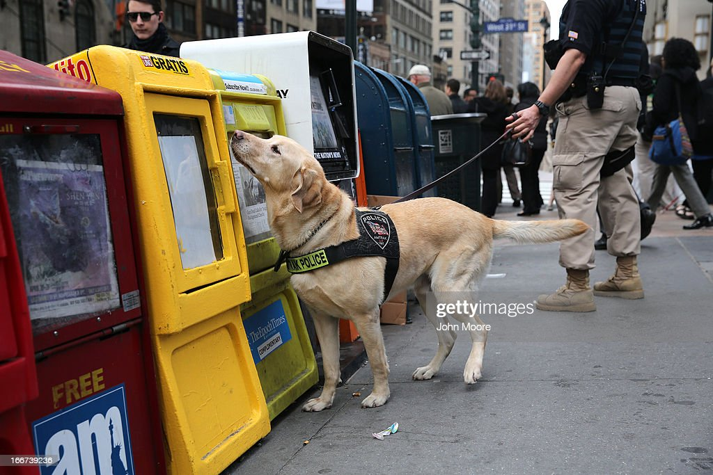 A police K-9 unit dog sniffs newspaper boxes for explosives outside of Penn Station on April 16, 2013 in New York City. Police were out in force throughout New York, a day after explosions near the finish line of the Boston Marathon killed 3 people and wounded more than 170 others.