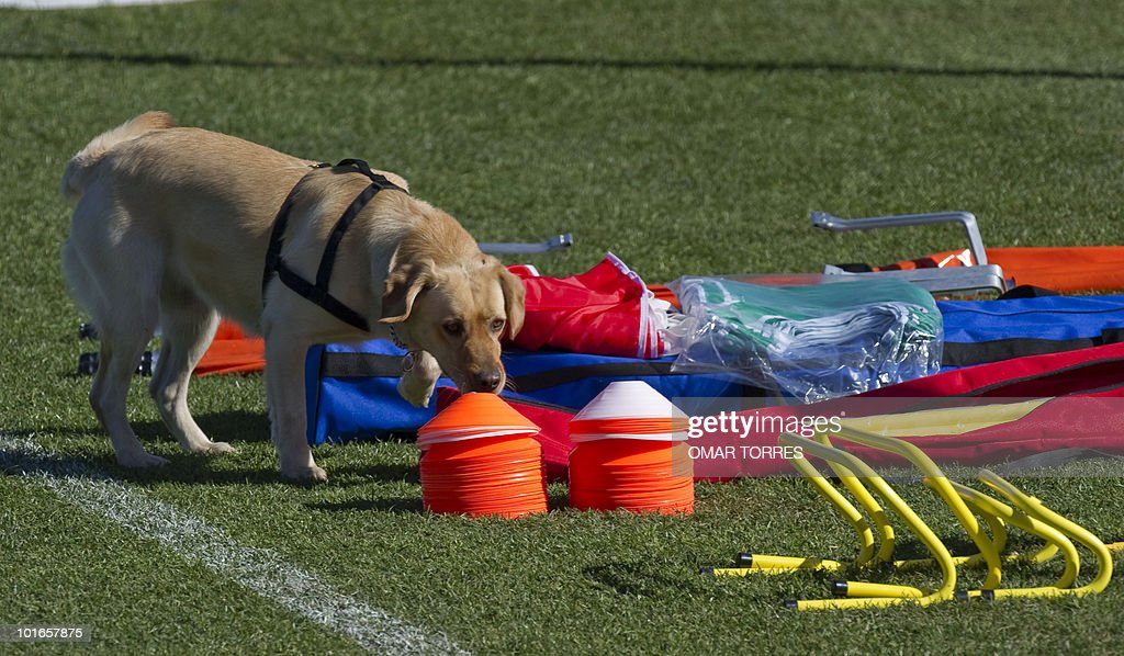 A police labrador checks the equipment that will be used by the Mexican football team during a training session on June 5, 2010 at the Waterstone College in Johannesburg. The 2010 World Cup will take place in South Africa from June 11 to July 11, the first time on African soil for the biggest and most prestigious competition in sport.