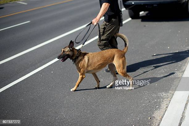 A police officer K9 unit monitors activity near the scene of an 'pipe bombstyle device' explosion on September 17 2016 in Seaside Park New Jersey The...