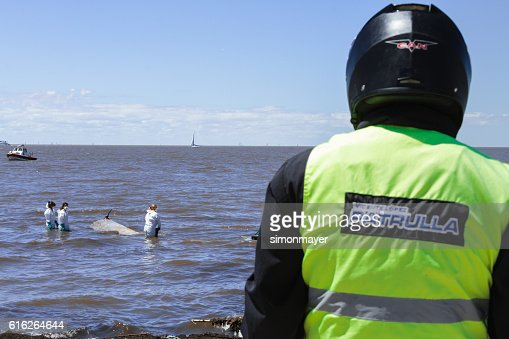 Police officer observes the work of some biologists : Stock Photo