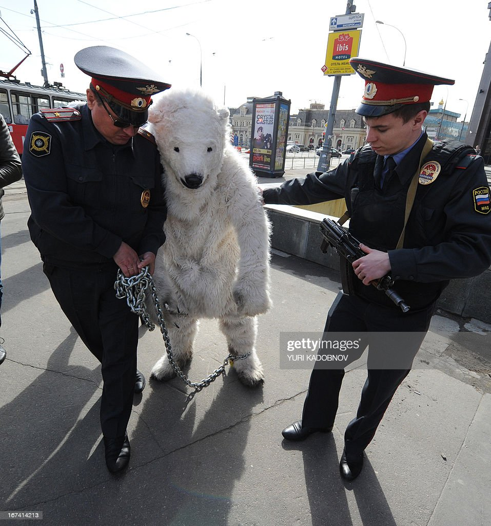 Police officers detain Greenpeace activists wearing polar bears costumes outside Norwegian oil and gas group Statoil's office in Moscow on April 25...