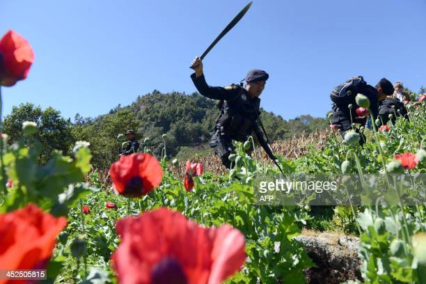 Police officers take part in an operation to destroy a poppy plantation in the 11 de Mayo village Tajumulco nunicipality San Marcos departament 315...