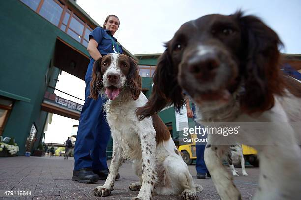 A police search dog sniffs the camera as a search is carried out ahead of play on day three at Wimbledon on July 1 2015 in London England The 129th...