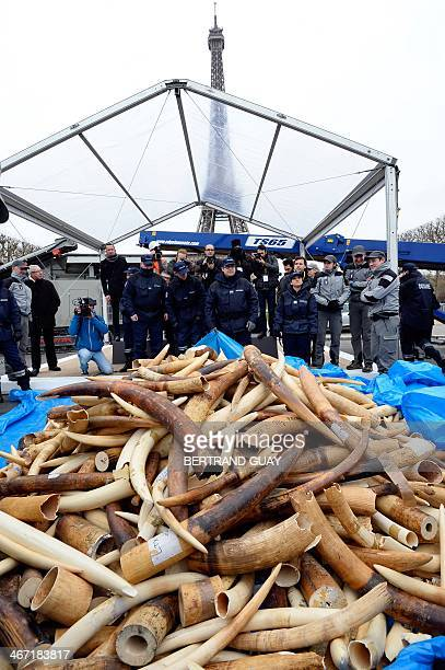 Policemen and photographers look at three tonnes of illegal ivory displayed on February 6 2014 in front of the Eiffel tower in Paris France fired the...