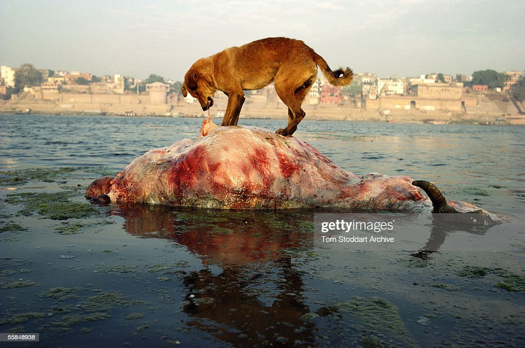 Pollution in the River Ganges at the Hindu Holy City of Varanasi.