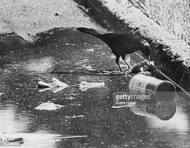 JUN 1971 JUN 6 1971 Pollution Is For The Birds Man's sloppy manners a basic factor in polluting the environment is an asset for this Cheesman Park...