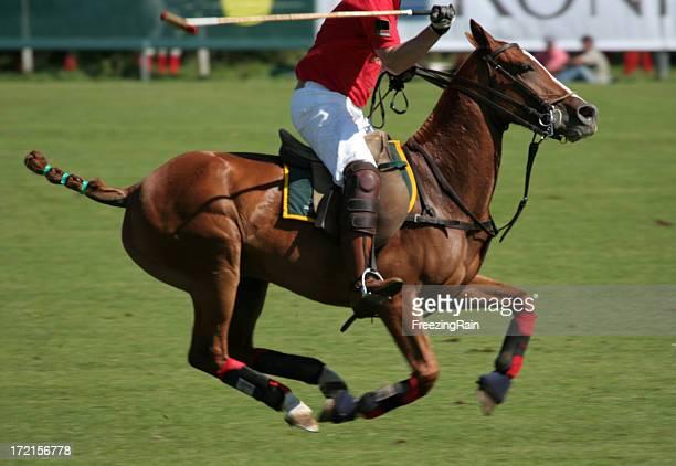 Polo cheval