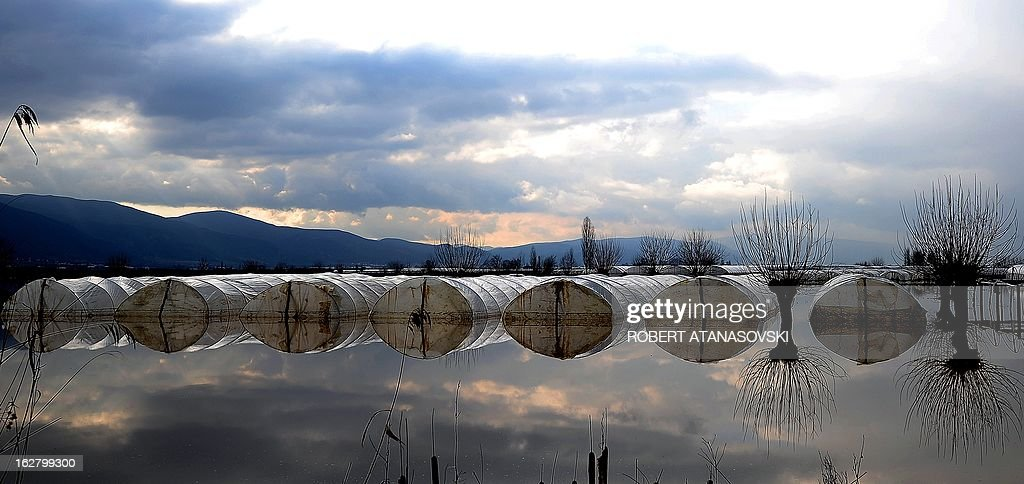 Polythene greenhouses are floodedin the village of Monospitovo, in the southeastern tip of the Republic of Macedonia on February 27, 2013. The torrential rains which in the last three days poured down on the fertile Strumica Valley inundated fields and villages, destroying or damaging crops and households. Tens of people in the region are now sheltered, as their homes were gravely damaged. AFP PHOTO/ROBERT ATANASOVSKI