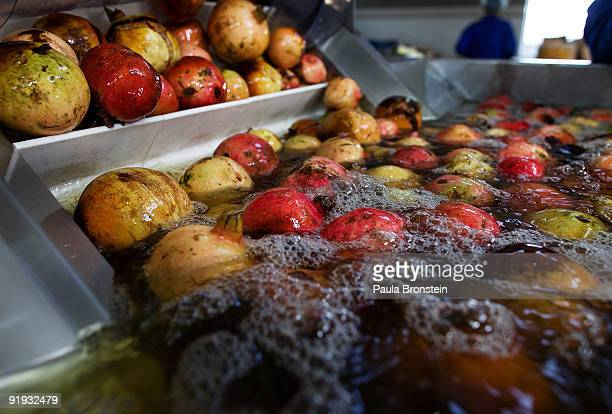 Pomegranates are washed at the Omaid Bahar Fruit Processing Company which is Afghanistan's first juice concentrate factory on October 15 2009 in...