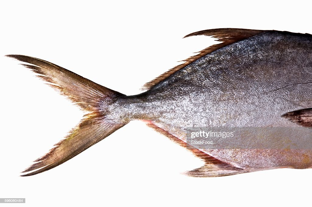 Pompano (Jack fish)