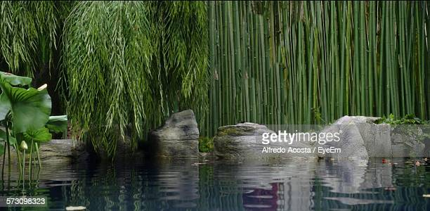 Pond By Trees In Park