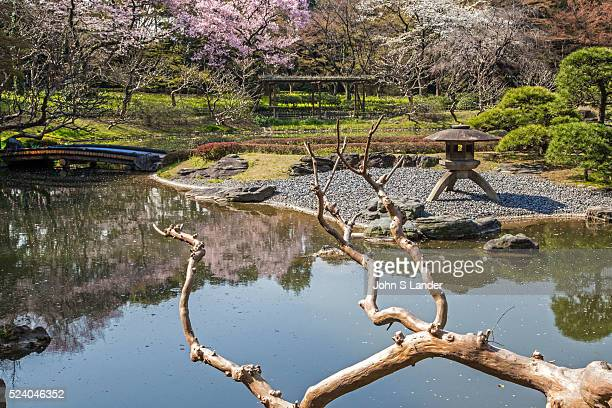 Pond Garden with Sakura Cherry Blossoms at Imperial Palace East Gardens made up of the Honmaru and Ninomaru areas of Edo Castle None of the Edo...