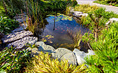 Pond in a beautiful creative lush green blooming garden