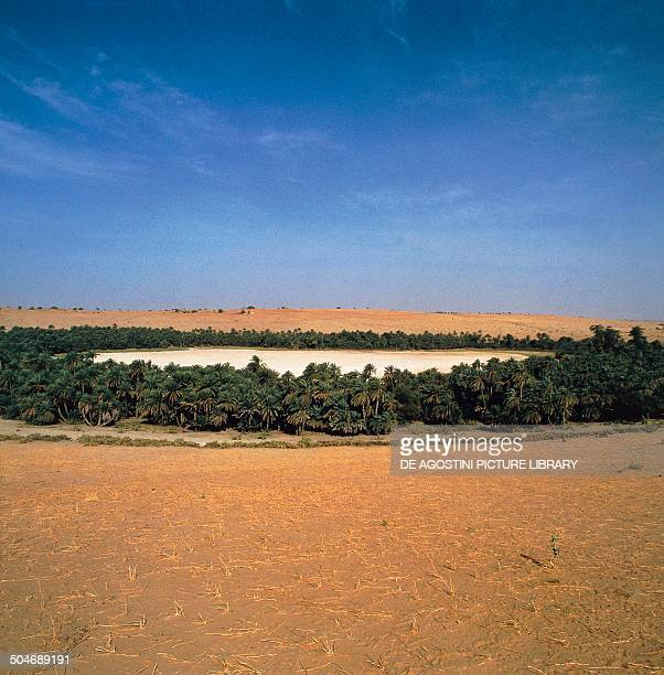 Pond surrounded by palm trees Sahel Chad