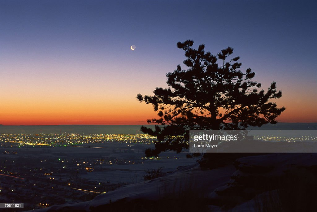 Ponderosa pine tree and city lights