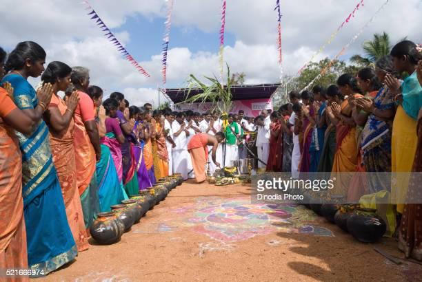 Pongal, Kinathukkadavu near Coimbatore, Tamil Nadu, India