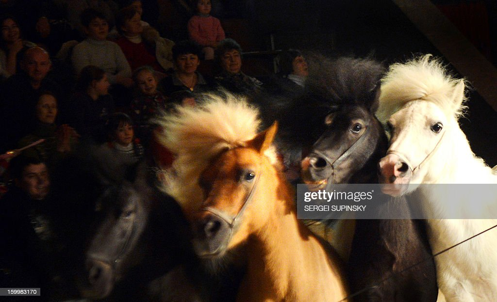Ponies gallop during presentation of a new programme in the Ukrainian National Circus in Kiev on January 24, 2013.