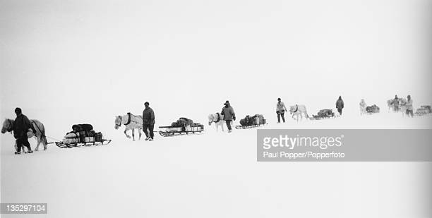 Ponies pulling sleds on the British Antarctic Expedition 1910 to the South Pole led by Robert Falcon Scott circa 1911 This photograph was taken by...