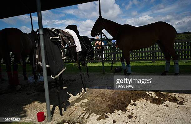 Ponies rest in the paddock at the Cartier International Polo day at Guards Polo Club in Windsor on July 25 2010 The Cartier International Day is the...