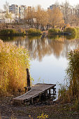 Pontoon and Phragmites australis close to the lake in autumn, in Kiev, Ukraine