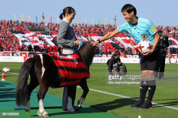 Pony Cicci is seen prior to the JLeague J1 match between Consadole Sapporo and Kashiwa Reysol at Sapporo Atsubetsu Stadium on October 14 2017 in...
