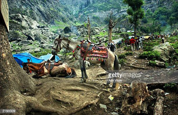 A pony rests along the path where pilgrims walk to the holy cave of Amarnath one of the most revered of Hindu shrines near the resort town of...