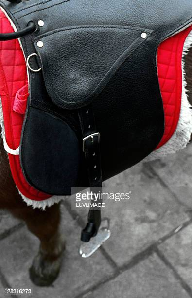 pony saddle upon the back of a brown pony with red blanket underneath