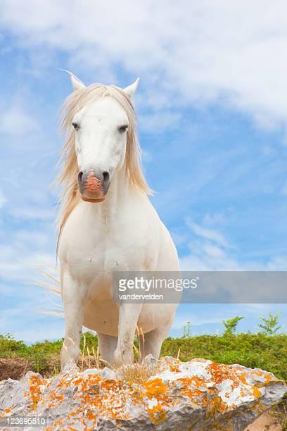 Pony Series