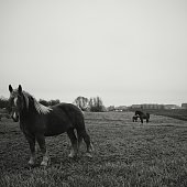 Pony Standing In Field
