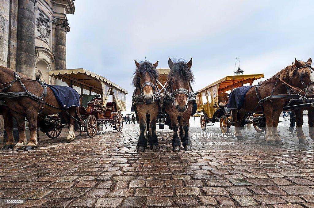 Pony Taxi : Stock Photo
