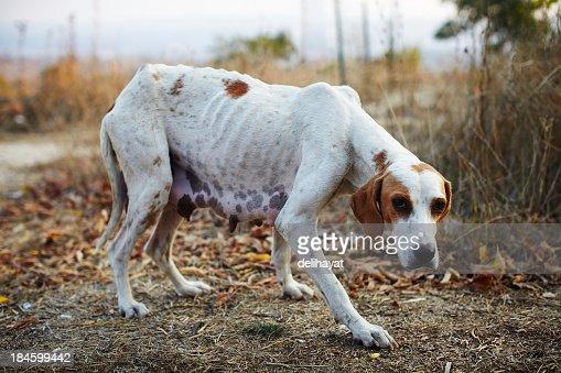 Poor dog