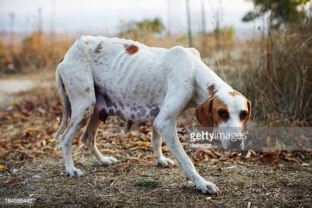 Pauvres chien
