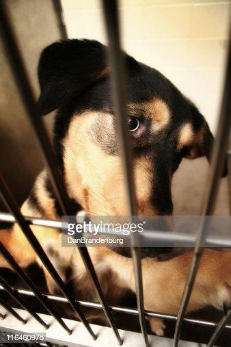 Poor Doggie