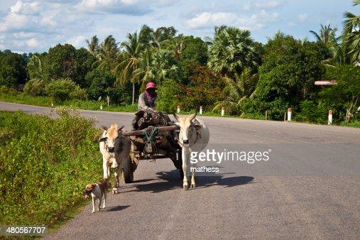 Poor man on his water buffalo cart : Stock Photo