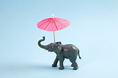 a plastic elephant with a red cocktail umbrella on a vibrant blue background. Minimal color still life photography