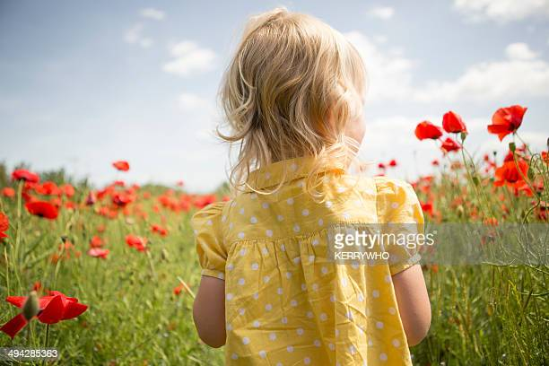Poppies and child