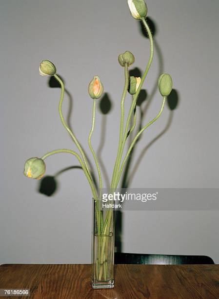 Poppies in a vase on a table