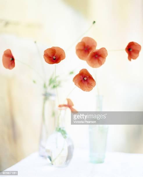 Poppies in vases