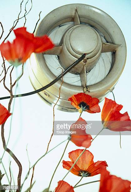 Poppies next to a fan