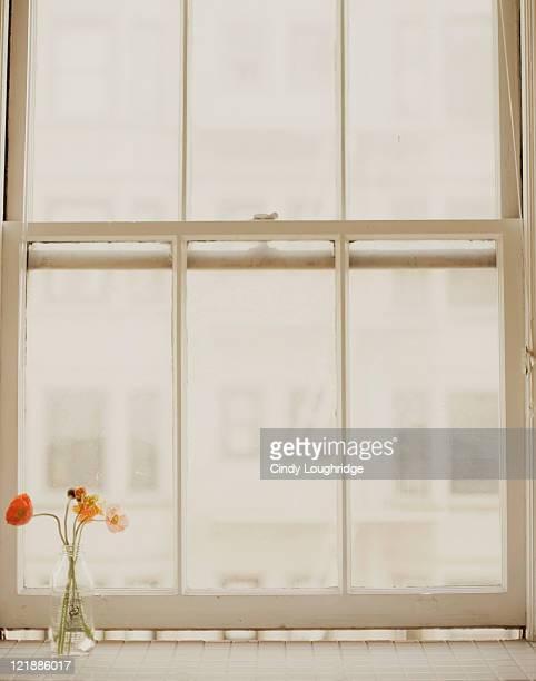 Poppies on window