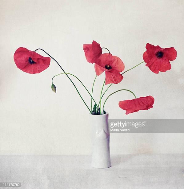 Poppies still-life