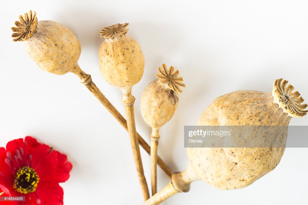 Poppy heads and flower on white : Foto de stock