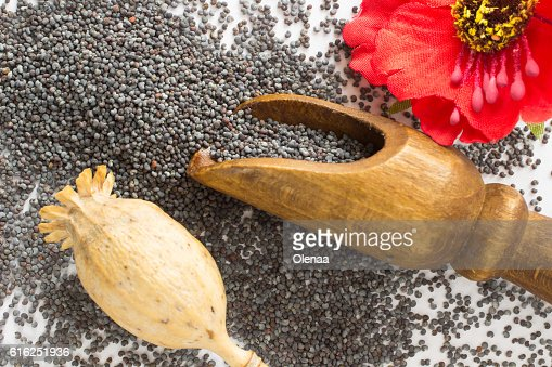 Poppy heads, poppy grain and flower on white : Foto de stock