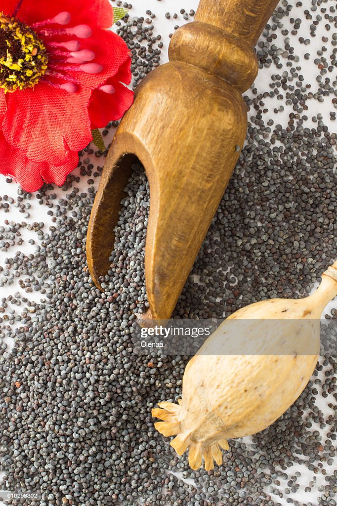 Poppy heads, poppy grain and flower on white : Stock Photo